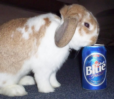 drinking-rabbit.jpg