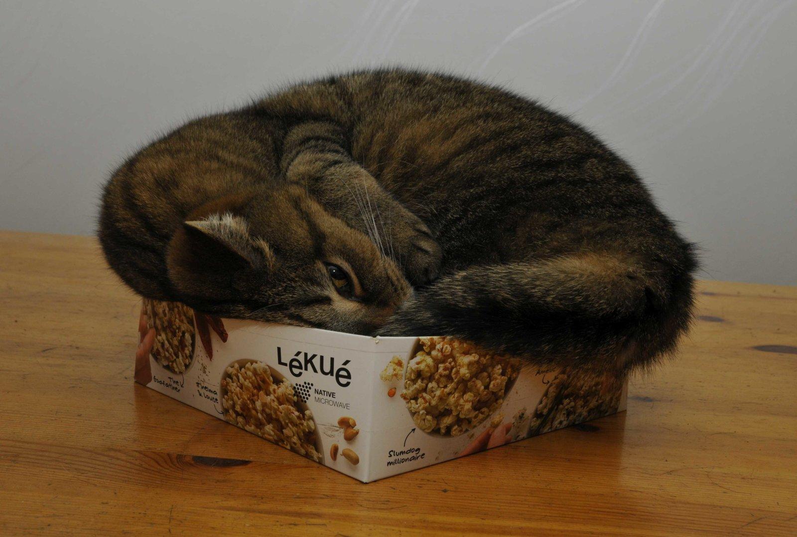 Ebbe på låda.