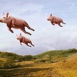 Flying pigs.jpg