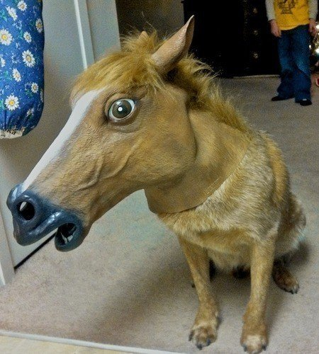 horse-head-mask-dog-500x500.jpg