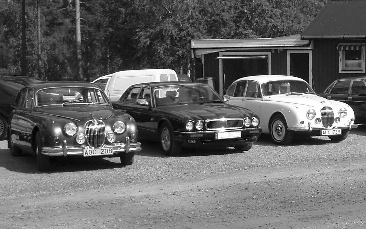 Jaguarträff.jpg