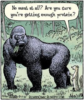 protein-vegetarian.jpg