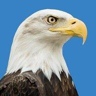 The_ill_Eagle